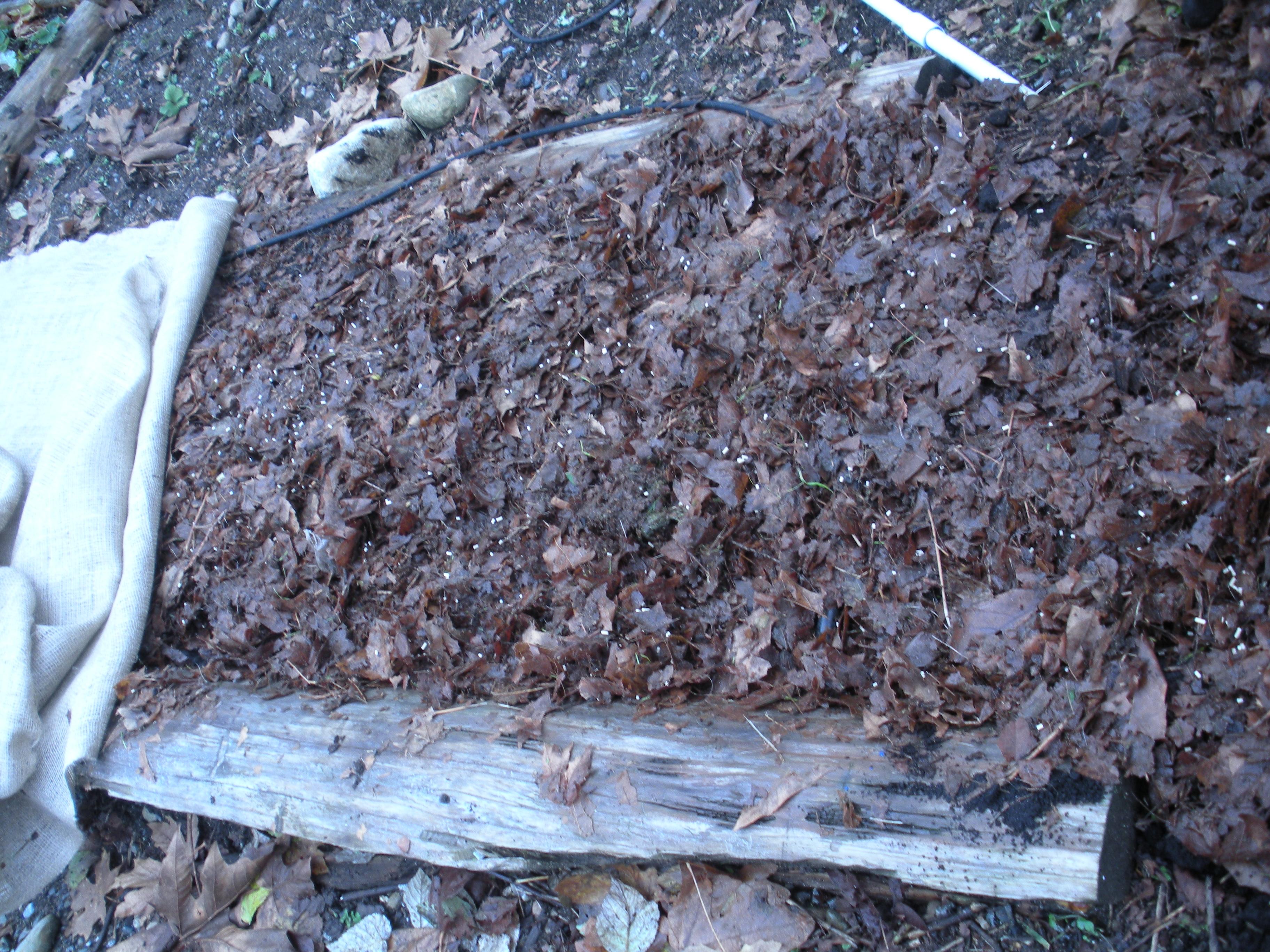 Tilling Leaves Garden
