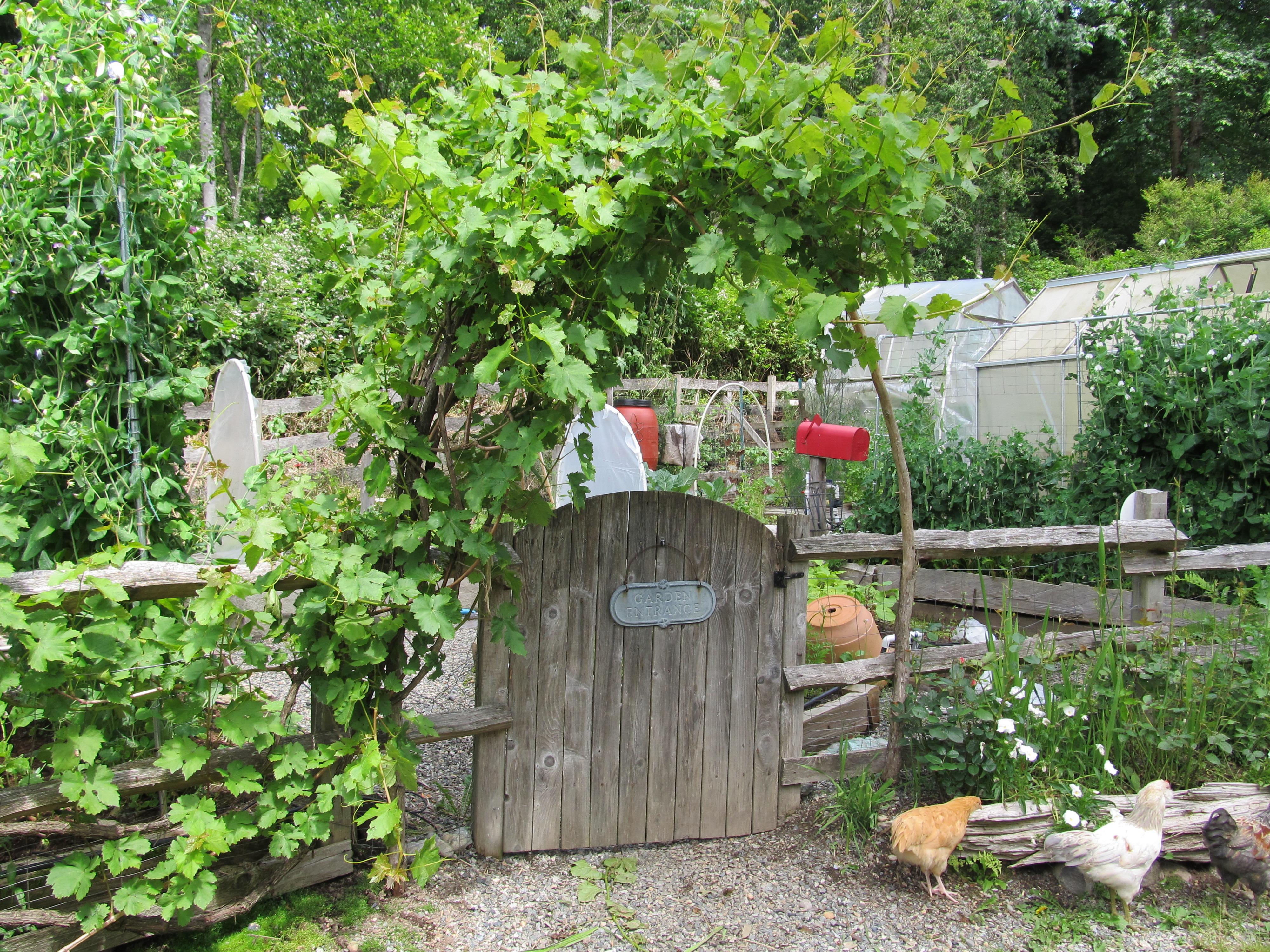 Our Kitchen Garden Robins Garden An Ongoing Photo Tour Throughout The Seasons